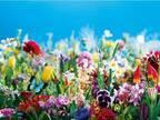 「虚構と現実」をテーマに。蜷川実花が名古屋・松坂屋美術館で展覧会を初開催