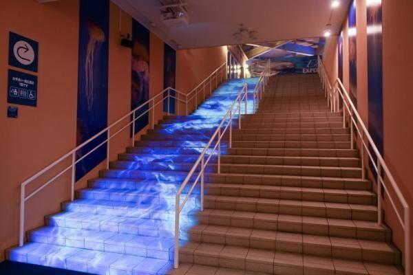 """5分で読める「夜の新江ノ島水族館」ガイド - クラゲホールや大水槽など""""えのすい""""を紹介"""