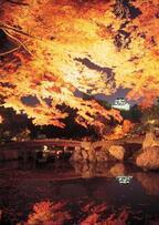 国宝・彦根城「玄宮園」秋の紅葉ライトアップ - 滋賀県の紅葉スポットを紹介
