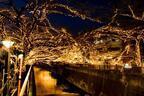 中目黒 目黒川沿いに新イルミネーション「黄金のドーム」出現 - 川全体が宝石のように輝く