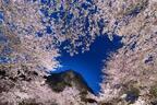 佐賀・御船山楽園「花まつり」春は2千本の桜・初夏はツツジと大藤が開花、九州最大規模のライトアップも