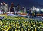 花と緑のテーマパーク「うめきたガーデン」、2万本が咲き誇る