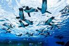 """サンシャイン水族館 屋外エリアが一新「天空のペンギン」など世界初展示 - """"都会の上空""""を飛び交う姿"""