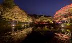 神戸・六甲高山植物園の紅葉ライトアップ「夜の紅葉散策」