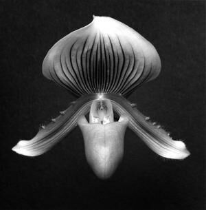 ロバート メイプルソープの写真展「メメント モリ」シャネル銀座で、美しさの中に刹那を讃えた花々