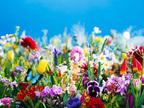 蜷川実花のソロ・エキシビション、丸の内にて開催 -「花」シリーズの最新作ほか、鮮やかな空間を体感