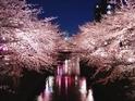 シャンドンを片手に目黒川と隅田川でお花見クルージング - 船の上で過ごす大人の時間