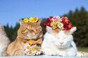 猫たちの写真展「かご猫展~かご猫シロと季節のなかで~」 千葉・柏にて開催