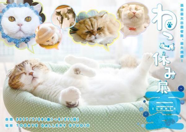 過去最大級の「ねこ休み展」東京、新潟にて開催 - 新作ねこグッズや初参戦のスター猫