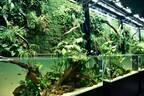 """「ネイチャーアクアリウム」水景クリエイター天野尚の展覧会、大自然を凝縮した巨大な""""水草水槽アート"""""""
