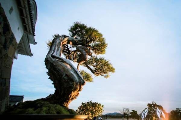 芸術の饗宴「姫路城×彩時記」開催、姫路城を舞台に繰り広げられる現代アートやイルミネーション