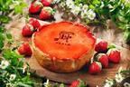 パブロの新作つぶつぶいちごチーズタルト、爽やかな種入りいちごソース&ピスタチオアイスのセットも