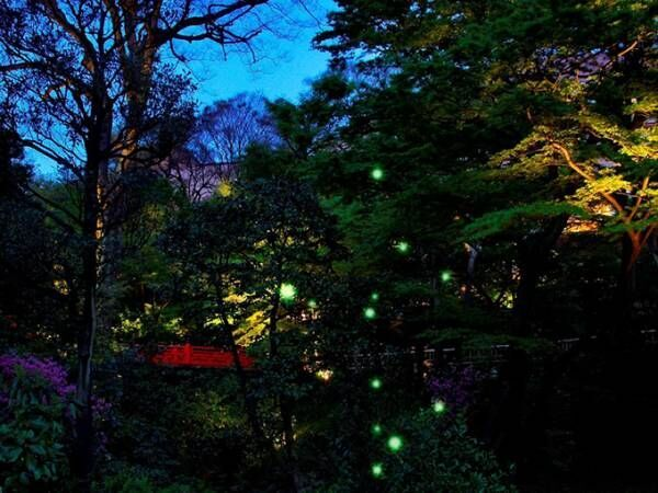 ホテル椿山荘東京「ほたるの夕べ」で蛍観賞、閉園後に庭園に招待されるスイート宿泊プランも