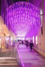 「新宿テラスシティ イルミネーション」新宿西口・南口エリアに、花がテーマのイルミネーション点灯
