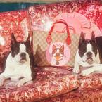 グッチから「戌年」コレクション - ミケーレの愛犬を描いたウェアやシューズ、バッグなど