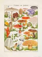きのこの肖像画「小林 路子 菌類画の世界~きのこに会いにいきましょう!~」京都で開催