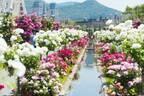 長崎・ハウステンボスで「2,000品種120万本のバラ祭」バラの絶景が楽しめるカフェも