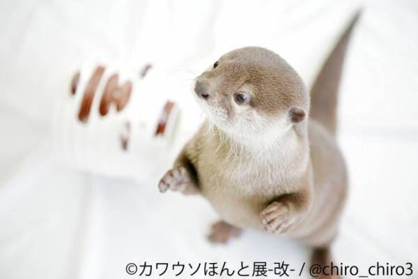 「カワウソほんと展 -改-」東京・浅草橋で、作品展示のほか1,000点超のグッズ販売も