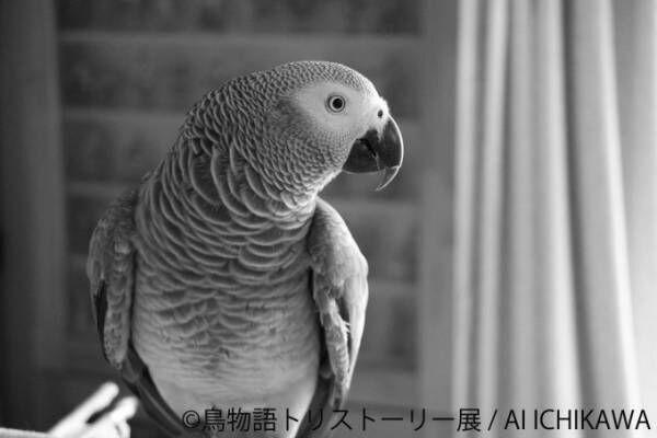 """「鳥物語トリストーリー展」浅草橋・名古屋で開催、鳥たちの""""一瞬の美しさ""""がテーマの合同写真&物販展"""