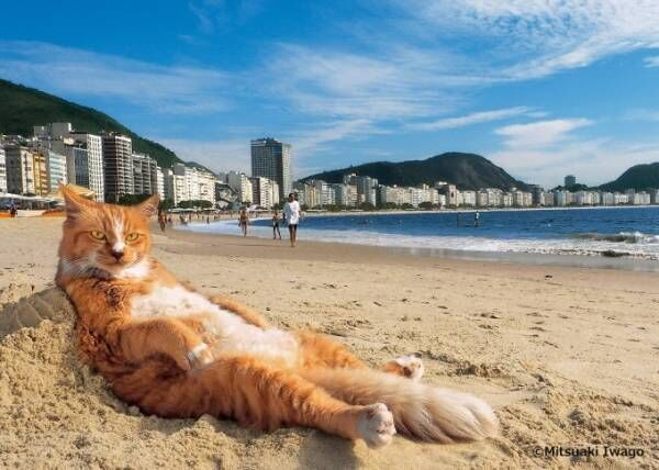 岩合光昭の写真展「岩合光昭の世界ネコ歩き2」日本橋三越本店で、世界のネコ作品約170点展示