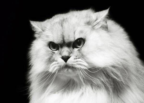"""ミュベールによる""""猫""""の写真展、榊原俊寿の作品を展示 - ネコTシャツも登場"""
