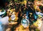 京都水族館「WOW!金魚あそび」金魚が妖精のように泳ぐ水槽や金魚鉢ドリンクなど