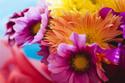 蜷川実花の展覧会「蜷川実花展 -虚構と現実の間に-」熊本・愛知・大分に、9テーマで写真の本質に迫る