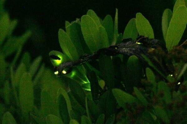すみだ水族館×東武動物公園「なつとほたるとすいぞくかん」ホタルの光が灯る夜の水族館、ランタン貸出も