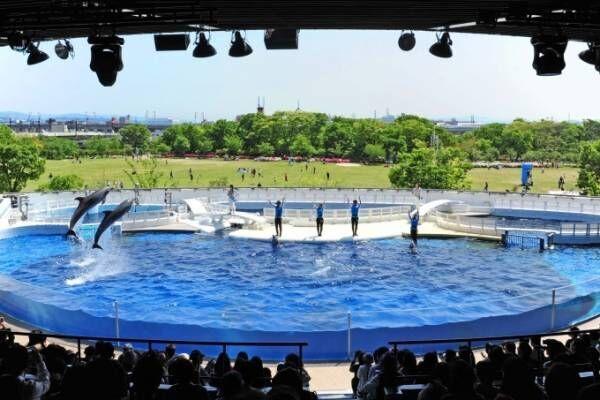 京都水族館の劇場型イルカパフォーマンス「ラ・ラ・フィン サーカス」エイベックスが企画・制作