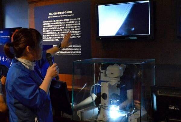 """新江ノ島水族館""""クラゲ""""のイベント - 3Dプロジェクションマッピングのショーやバックヤードツアー"""