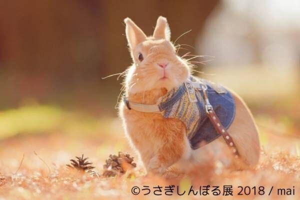「うさぎしんぼる展 2018」東京・浅草橋で、うさぎの写真&グッズ計1,000点以上を展示販売