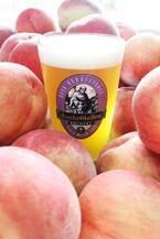 サンクトガーレンのフルーツビール「7種の桃エール」過去最高量400キロの桃を使用した贅沢な甘み
