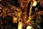 「オモハラ イルミネーション」東急プラザ表参道原宿・屋上テラスで、樹木と灯りの幻想空間