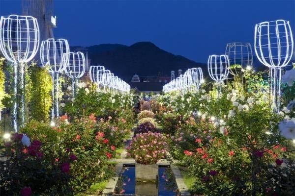ハウステンボス「秋バラ祭」イルミネーションと香り高いバラが織りなす幻想的世界へ