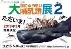 """「大哺乳類展2」国立科学博物館で開催、400点以上の剥製や骨格標本で紐解く、哺乳類の""""生き残り戦略"""""""