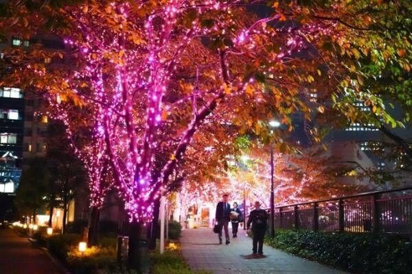 """「目黒川みんなのイルミネーション2018」山手線内側最大級、約40万個のLED輝く""""冬の桜""""が満開に"""