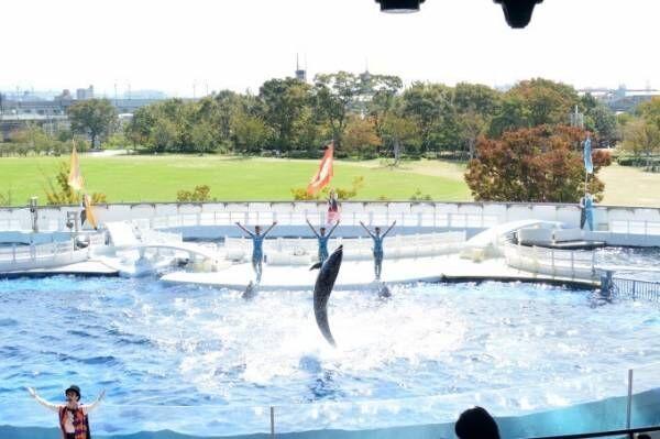京都水族館のイルカパフォーマンス「ラ・ラ・フィン サーカス」開催、エイベックスが企画・制作