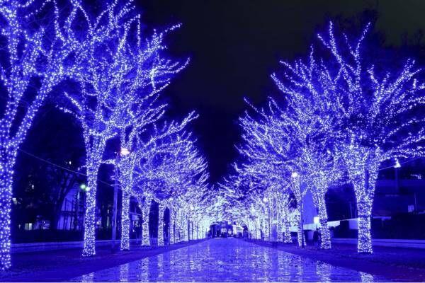 『青の洞窟 SHIBUYA』渋谷公園通り~代々木公園ケヤキ並木が青一色に染まる