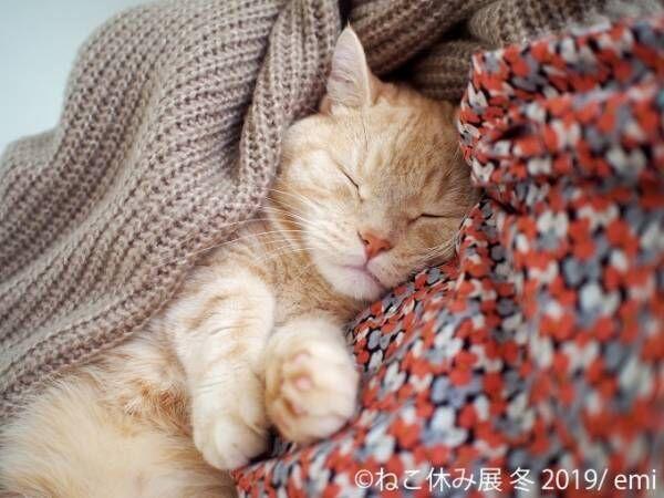 「ねこ休み展」冬の本祭、猫クリエイターの合同写真展&物販展が東京・浅草橋で開催