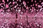"""チームラボの春限定""""桜色""""プログラムがお台場で - ランプの森が桜一色に"""