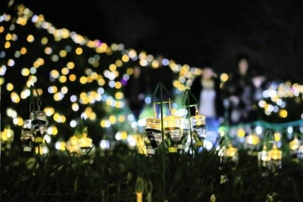 """絶景イルミネーション「水仙岬のかがやき2019」福井で - 16,100個のLEDによる""""電飾の花"""""""