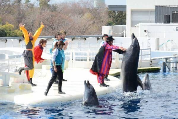京都水族館のイルカパフォーマンス「ラ・ラ・フィン サーカス」4部作の最終章、エイベックスが制作