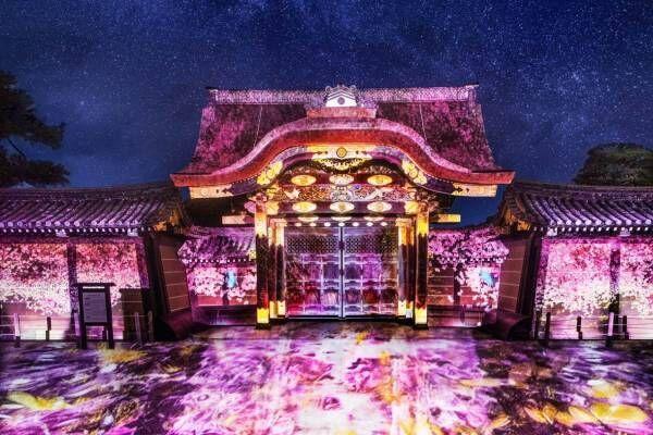 京都「二条城桜まつり2019」ネイキッドによる桜のプロジェクションマッピング、過去最大の演出で