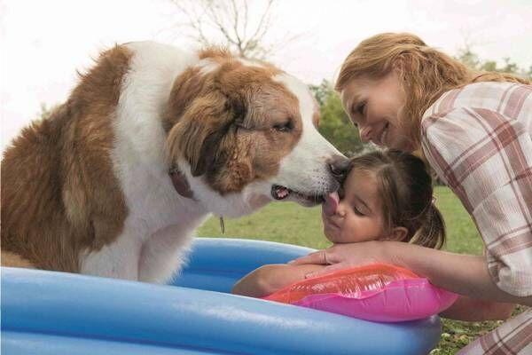 映画『僕のワンダフル・ジャーニー』愛犬と飼い主のラブストーリー「僕のワンダフル・ライフ」続編