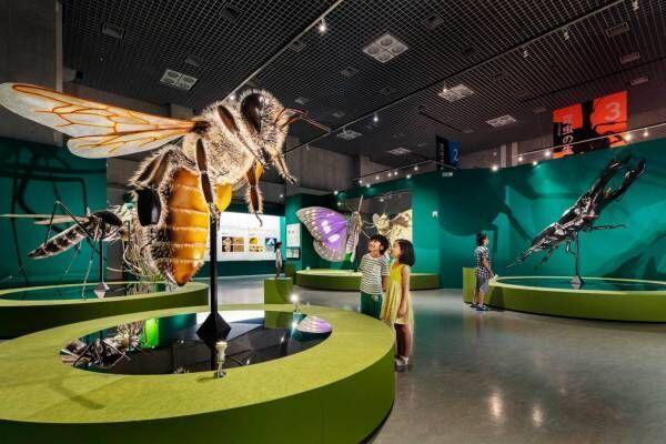"""特別展「昆虫」大阪市立自然史博物館で開催、""""昆虫の驚く べき世界""""を世界で収集した標本と共に紹介"""