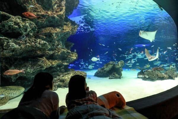 サンシャイン水族館の宿泊イベント「オトナ女子の夜ふかし水族館」水槽前でお泊まり&間近で生き物観察