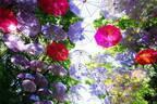 """日本最大級""""アンブレラスカイ""""がメッツァビレッジに、マリメッコの鈴木マサルによるポップな傘アート"""