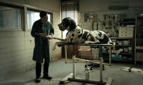 映画『ドッグマン』イタリアの鬼才 マッテオ・ガローネ作、誰の人生にも潜む不条理を描いた問題作