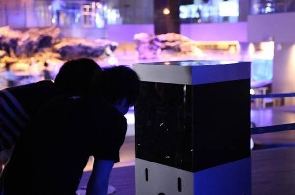 すみだ水族館でホタル鑑賞イベント「ホタルの夜」夜の水族館で楽しむ幻想的な光
