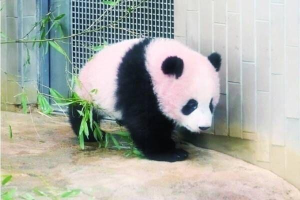 パンダスイーツ&グッズ約250種類が松坂屋上野店に、パンダのシャンシャン生誕2周年記念